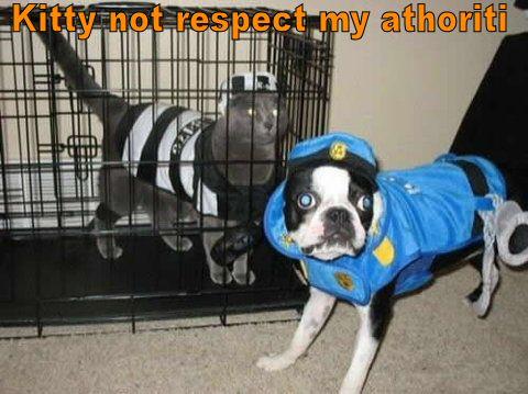 kitty-in-jail