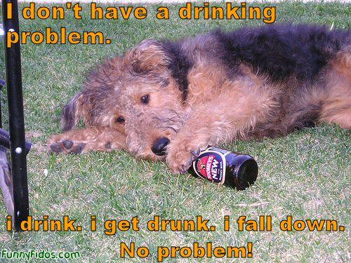 happy birthday funny dog. Happy Birthday Brookie!