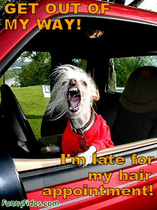 funny-dog-get-out-of-the-way