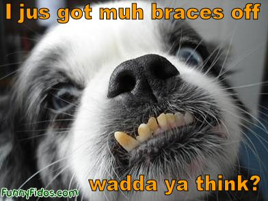 funny-dog-i-jus-got-muh-braces-off - Picture of Yourself - Introduce Yourself