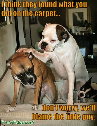 funny dog - don\'t worry