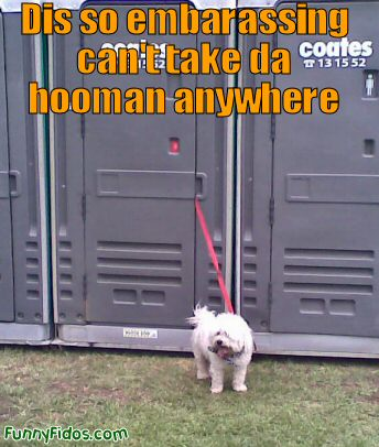 outhouse dog