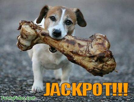 doggie jackpot