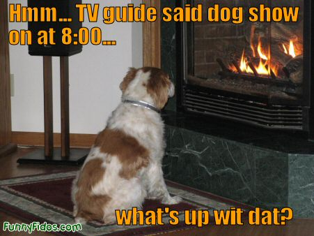dog starring at fireplace