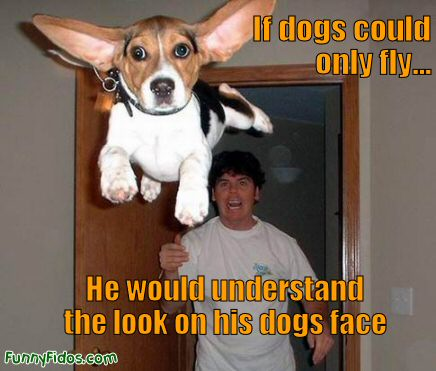 funny dog pictures. Posted in Funny Dog Pictures I