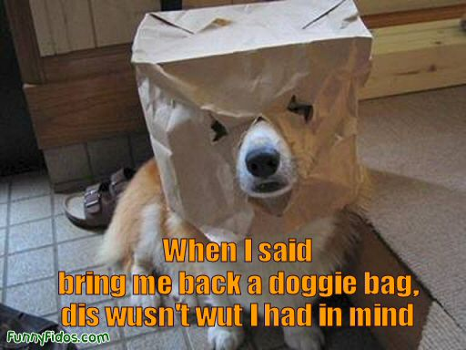 dog with a bag on his head