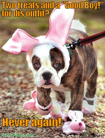 dog dressed as bunny rabbit