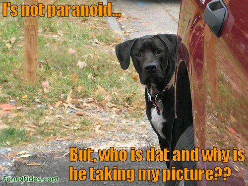 paraniod dog