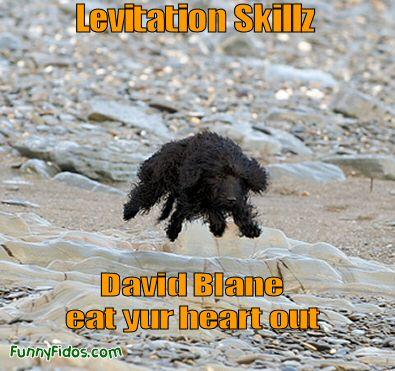 dog looks to be doing levitation