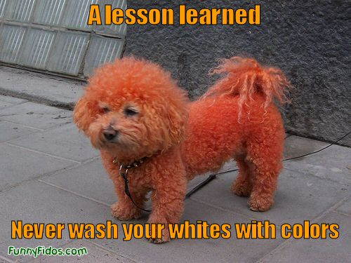 dog dyed red