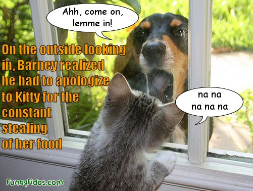 funny dog begging cat to let him in