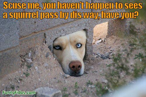 Funny dog peeking head through hole