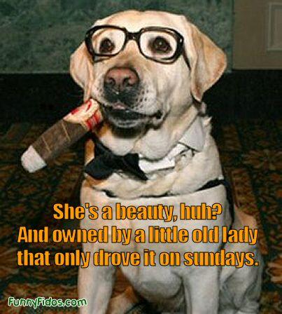 funny dog car salesman