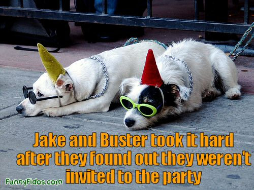 two dogs with party hats on