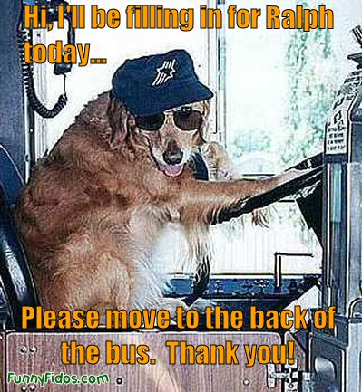 dog driving a bus