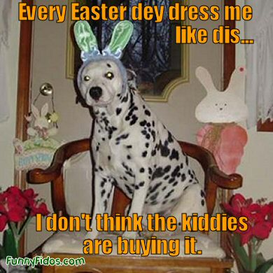 Funny dog dressed like easter bunny
