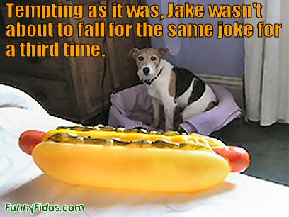 dog and fake hot dog