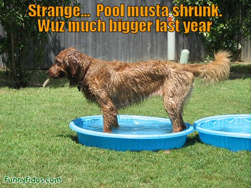 dog in a kiddie pool