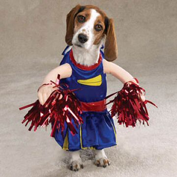 Funny dog dressed as cheerleader