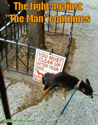 Funny picture of a dog peeing on a sign