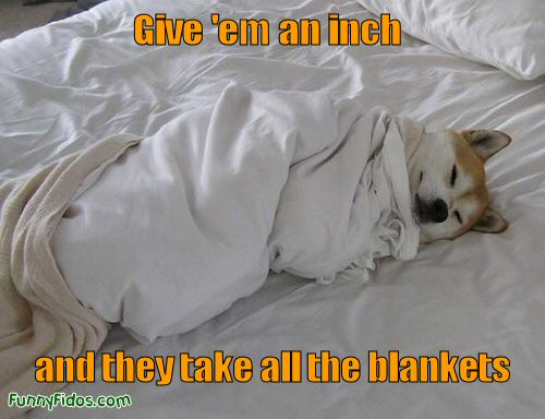 Funny picture of a dop hogging all the blanket