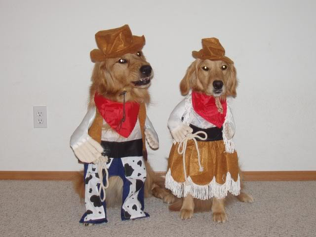 two dogs dressed as cowboys