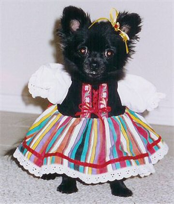 Cute littel dog dressed as Heidi
