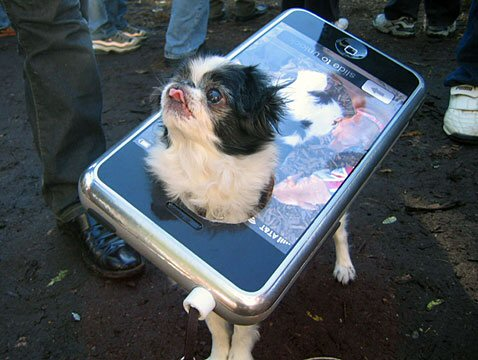 funny dog dressed as an ipod