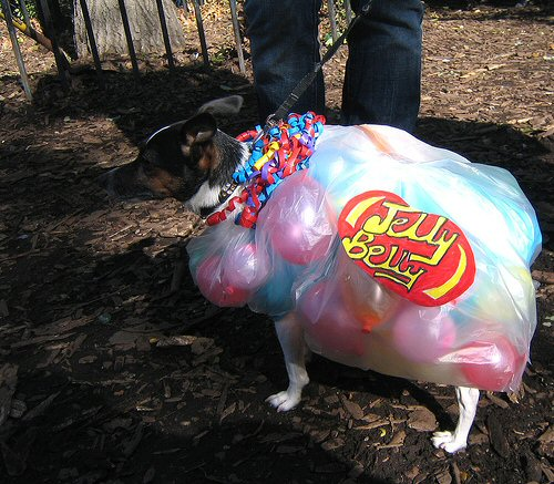 dog dressed in jelly belly costume