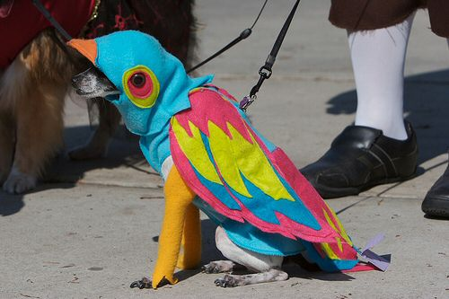 Dog dressed as a Parrot