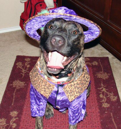 Dog dressed as a pimp