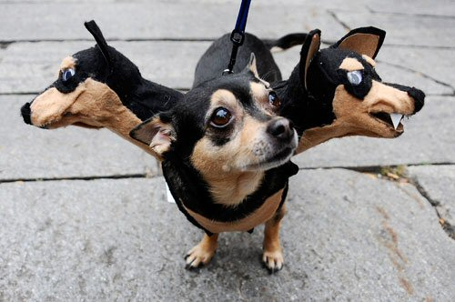 funny pictures of dogs in costumes. three headed dog costume