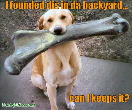 funny dog pictures. Funny Dog with a big bone