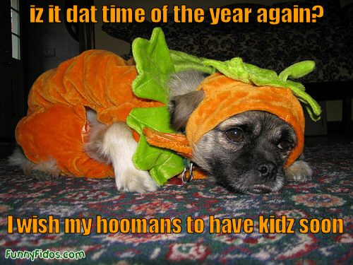 funny dog not looking happy about his Halloween costume & Dog Halloween Hell