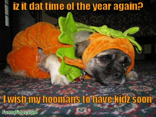 Dog Halloween Hell