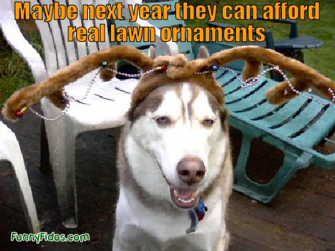 funny dog with antlers on his head
