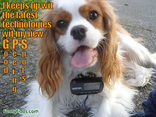 Funny picture of a dog wearing a GPS