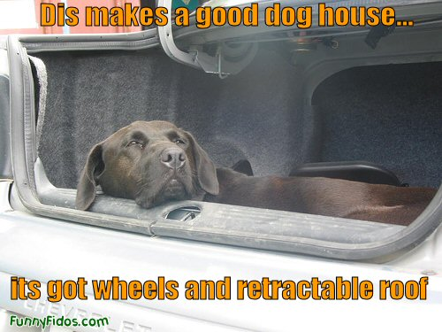 funny dog using car for dog house