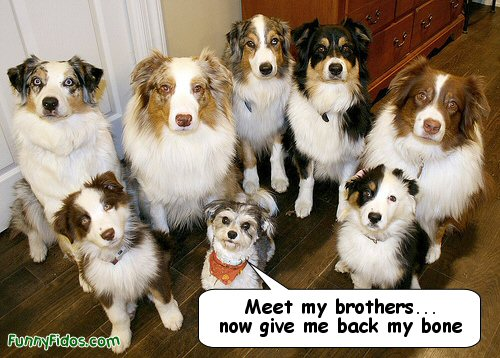little dog with a lot of brothers