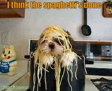Funny dog with spaghetti on his head