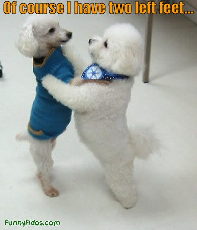 two dogs dancing