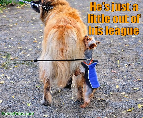 Funny little dog being a bit naughty
