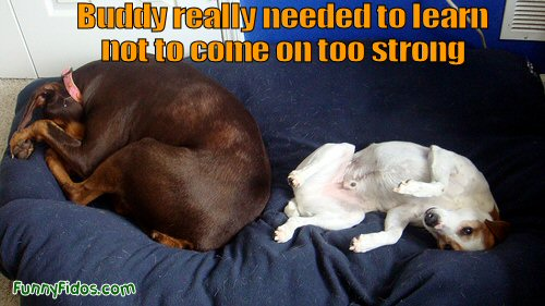 Funny dog making unwanted sexual advances