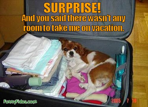 Dog stowaway in a suitcase