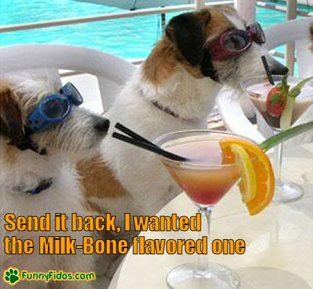 Dogs sitting pool side enjoying some drinks