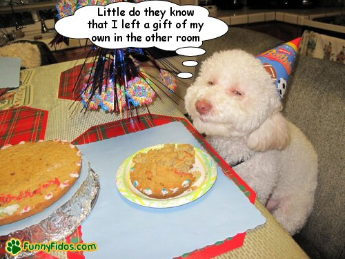 Dog celebrating a birthday