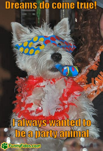 Funny dog dressed in party costume