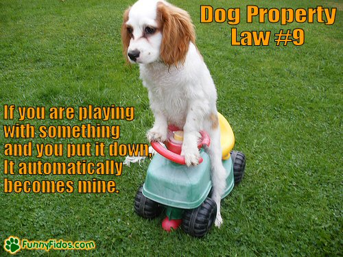 Dog riding a toy tractor
