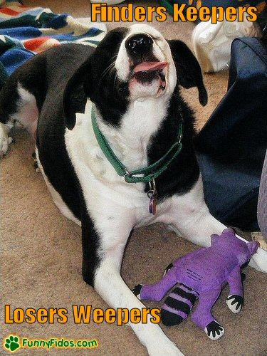 Dog sticking his tonge out