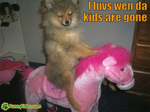 Funny little dog riding a stuffed pony